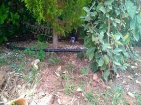 Ενδεικτικό σημείο τοποθέτησης παγίδας ωοθεσία δίπλα σε δένδρο
